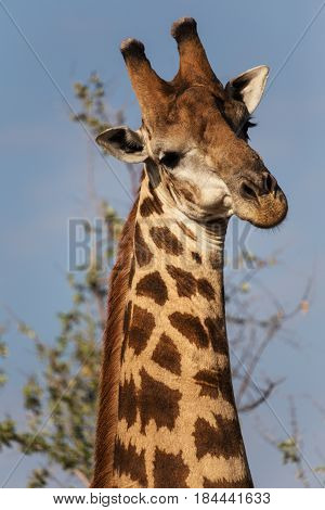 I took this photo near Kruger Park. It took just one moment to get her in model pose.