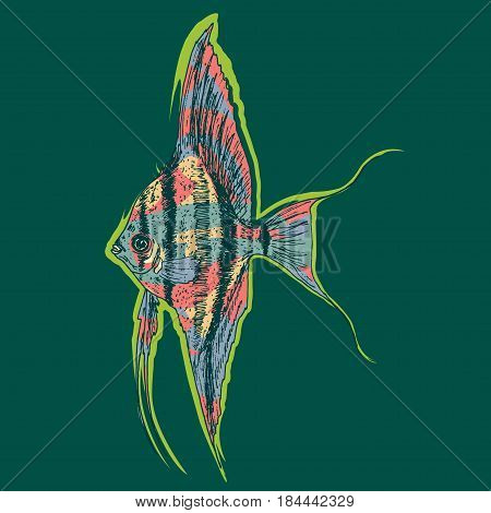 Graphic aquarium scalar or angelfish concept in colorful drawing style on green background isolated vector illustration