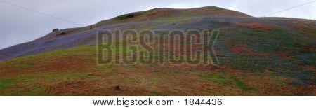 Bluehill