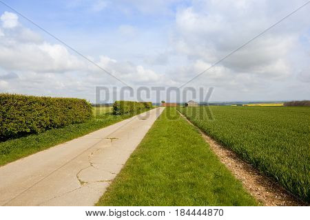 Bridleway Hedgerow And Wheat Field