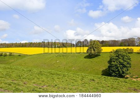 Oilseed Rape Crop And Meadows