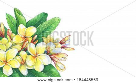 Greeting card of tropical flowers frangipani plumeria. Hand drawn watercolor painting on white background.