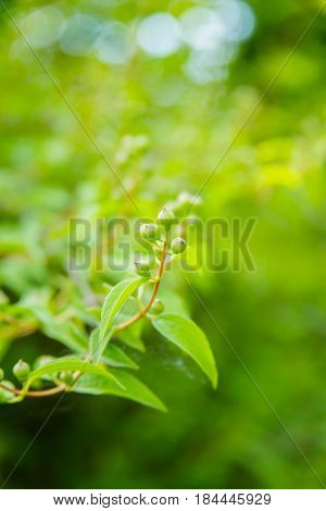 Green spring fresh shrub or tree leaves background