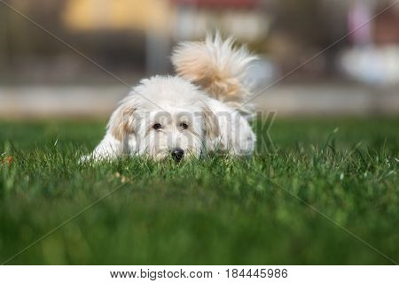 happy mixed breed dog outdoors in summer