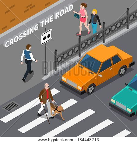 Blind person with cane and seeing eye dog on crosswalk cars waiting on road isometric vector illustration