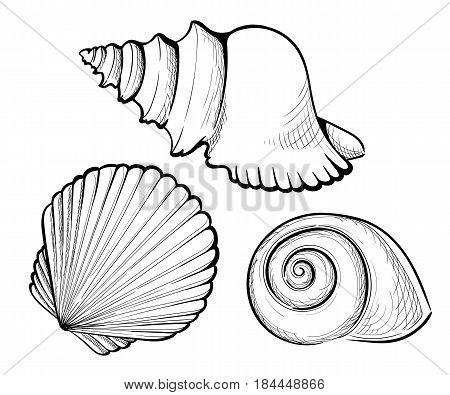 Hand Draw Set Sea Shell, Coral, Crab, Shrimp And Octopus. Vector Black Engraving Vintage Illustratio