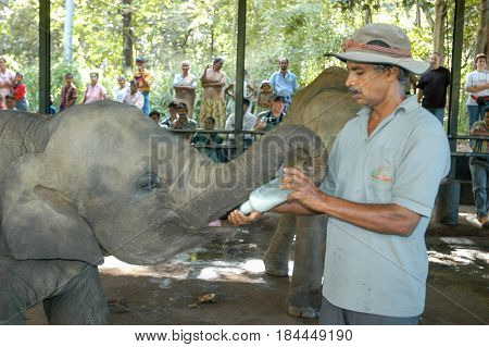 Pinnewala Sri lanka - 17 December 2004: Man giving the bottle of milk to a young elephant at the Pinnewala Elephant Orphanage on Sri Lanka