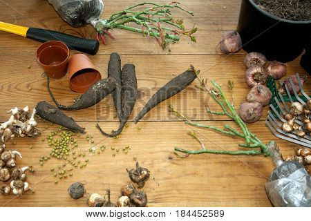 Hobby gardening. Rhizomes, seedlings and garden tools on a brightrustic wooden background. Seasonal work in the garden.