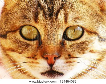 Emotional looking cat, innocent looking cat, roaming cat, postcard cat pictures