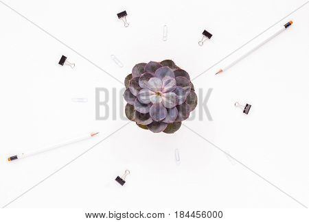 Office Workspace With White Pencils, Succulent, Clips On White Background. Top View, Flat Lay, Copy