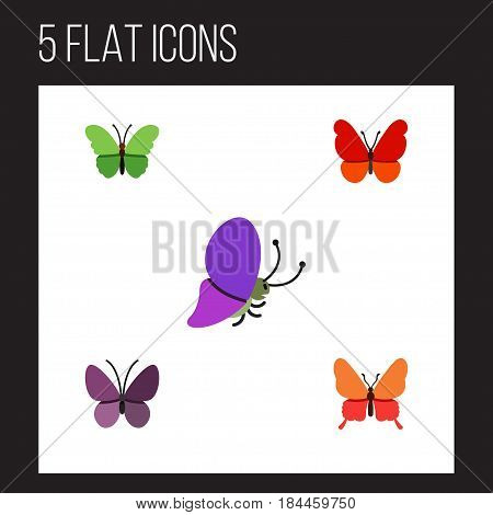 Flat Monarch Set Of Danaus Plexippus, Summer Insect, Violet Wing And Other Vector Objects. Also Includes Butterfly, Summer, Insect Elements.