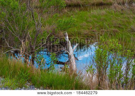 A fallen log lies across a stream that reflects the blue sky above
