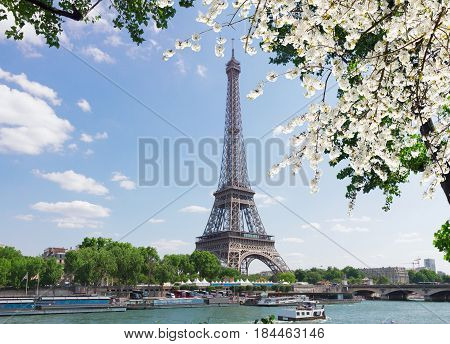 eiffel tour over Seine river with tree and spring tree flowers, Paris, France
