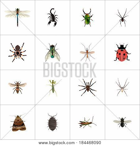Realistic Insect, Poisonous, Spinner And Other Vector Elements. Set Of Animal Realistic Symbols Also Includes Wisp, Wasp, Midge Objects.