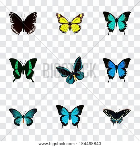 Realistic Beauty Fly, Demophoon, Archippus And Other Vector Elements. Set Of Beautiful Realistic Symbols Also Includes Moth, Cypris, Butterfly Objects.