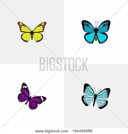 Realistic Archippus, Butterfly, Lexias And Other Vector Elements. Set Of Beauty Realistic Symbols Also Includes Bluewing, Sky, Butterfly Objects.