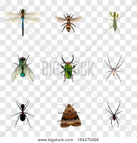 Realistic Grasshopper, Damselfly, Ant And Other Vector Elements. Set Of Bug Realistic Symbols Also Includes Jewel, Spider, Beetle Objects.