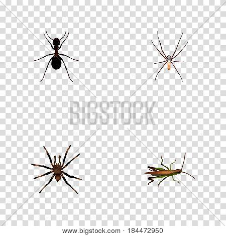 Realistic Locust, Spider, Ant And Other Vector Elements. Set Of Bug Realistic Symbols Also Includes Locust, Spinner, Arachnid Objects.
