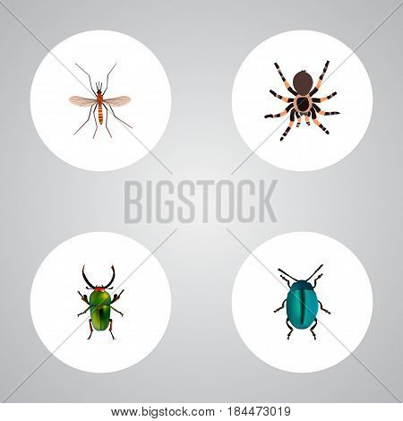 Realistic Gnat, Bug, Insect And Other Vector Elements. Set Of Bug Realistic Symbols Also Includes Dor, Arachnid, Mosquito Objects.