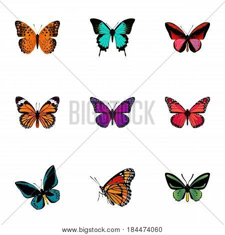 Realistic Tropical Moth, Demophoon, Danaus Plexippus And Other Vector Elements. Set Of Moth Realistic Symbols Also Includes Bluewing, Pink, Cynosura Objects.