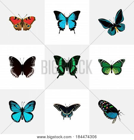 Realistic Papilio Ulysses, Sky Animal, Spicebush And Other Vector Elements. Set Of Moth Realistic Symbols Also Includes Sky, Malachite, Bluewing Objects.