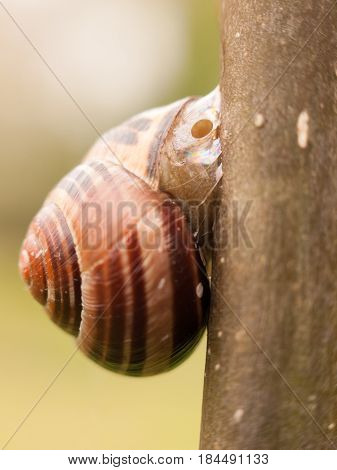 Snail Resting Attached To A Branch Outside