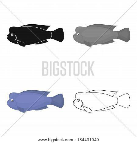 Stearocranus fish icon cartoon. Singe aquarium fish icon from the sea, ocean life cartoon.