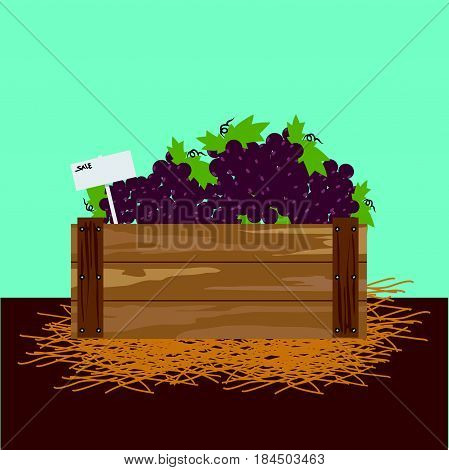 grape in a wooden crate Vector illustration.
