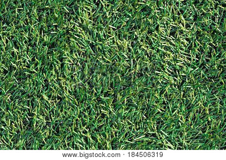 Artificial Green Grass Of Soccer Field
