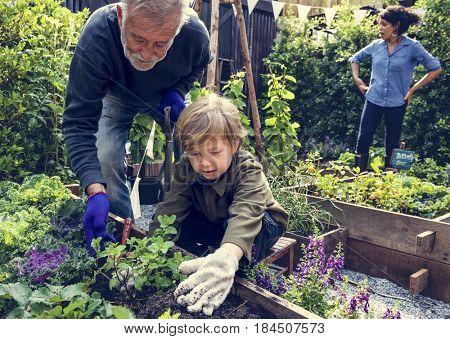Family planting vegetable from backyard garden