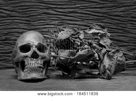 Old Human Skulls On Pile Of Dried Rose Flower In Dim Light Dark Night On Beautiful Wooden Table / St