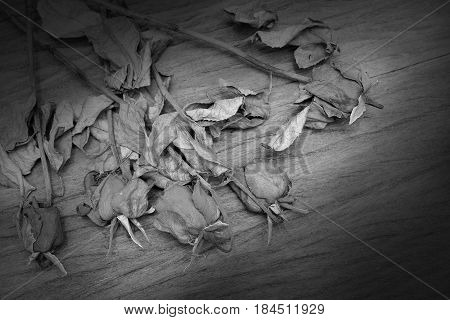 A Black And White Vintage Image Of A Rose On Wooden Table, Still Life Photography.