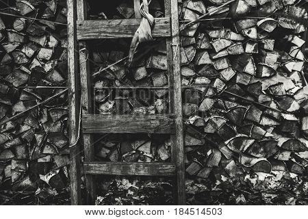 Black and white shooting of firewood stock with old wooden ladder near them woods storage with shabby timbered stepladder on dark moody winter or springtime day with dry oak leaves on the ground