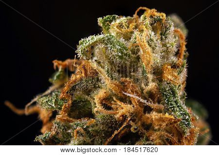 Abstract macro detail of cannabis bud (green crack marijuana strain) with visible hairs and trichomes