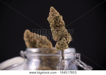 Detail of dried cannabis bud (green crack strain) isolated over black background with visible trichomes
