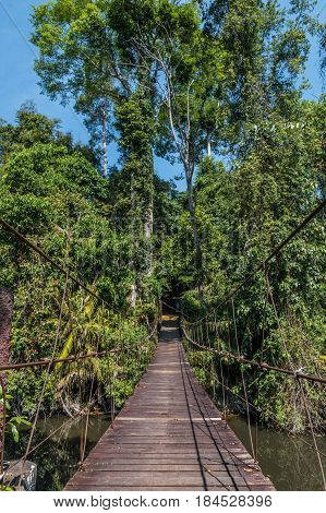 Wooden suspension bridge leading in tropical jungle