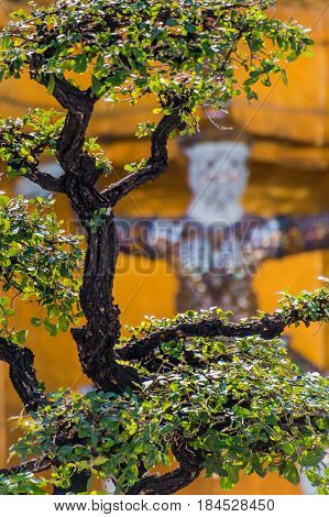 Bonsai tree in front of buddhist guard statue