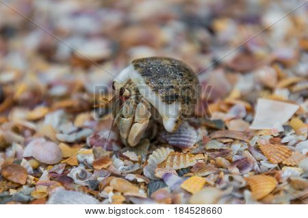 Snail crap macro shot walking on shells