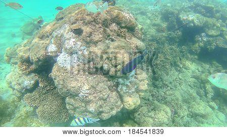 Parrot Fish, Perch, Carp Swim Around The Bright Colorful Coral R