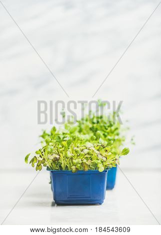 Fresh spring green live radish kress sprouts in plastic pots over white marble background for healthy eating, selective focus, copy space. Clean eating, dieting, detox food concept