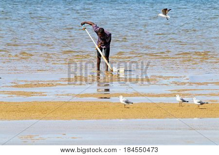 DURBAN SOUTH AFRICA - APRIL 9 2017: Early morning low tide with unknown man and seagulls searching for mud prawn in harbor in Durban South Africa