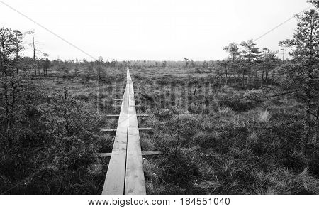 Hiking trail in bog with black and white