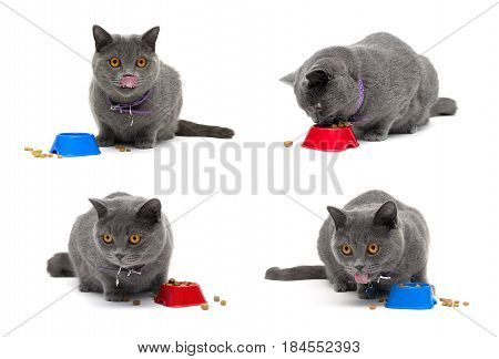 cat with yellow eyes sitting around a bowl of food. white background - horizontal photo.