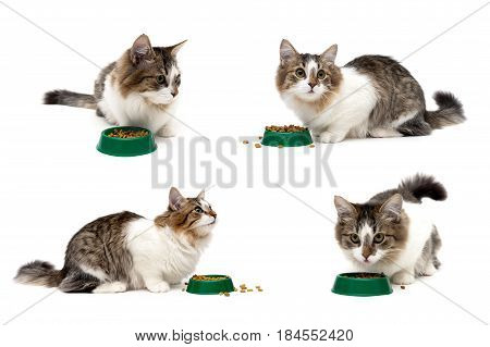 cat sits beside a bowl of food on a white background. horizontal photo.