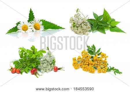 Medical herbs and wild rose berries isolated on white background. Horizontal photo.
