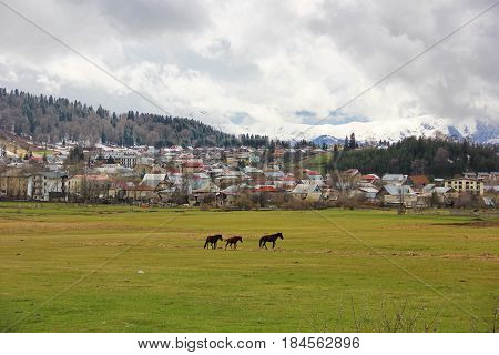 lawn with three graceful horses on the background of the city of Bakuriani, a lot of houses on the background mountain with snow, low overcast clouds