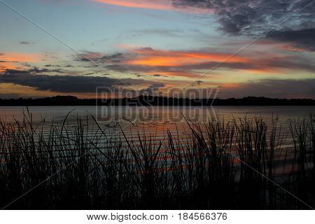Looking out onto a lake during a the sunset afterglow right after a boat went by and created ripples in the water. Tall grass in the foreground with a tall tree line in the background.