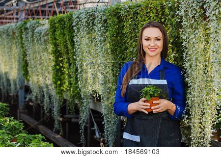 Beautiful woman, Horticultural worker, while working smiling and looking at the camera Holding a potted flower
