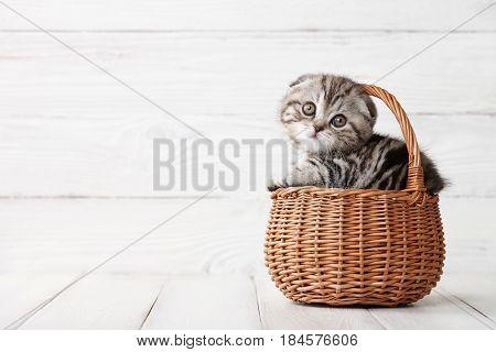 Cute scottish fold kitten in basket on white wooden background