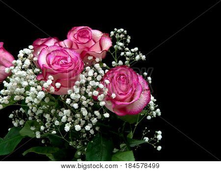 bouquet of pink roses isolated on black background. Horizontal photo.